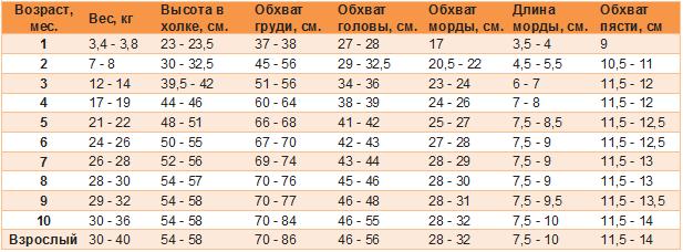 Рост, вес и другие размеры лабрадора ретривера от 1 месяца