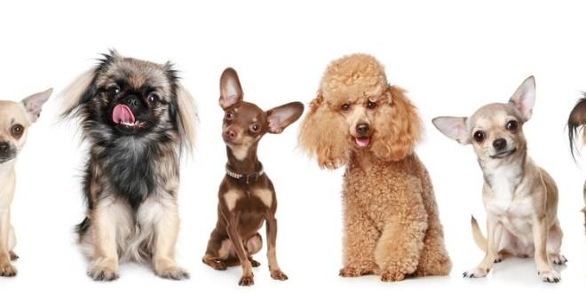 Как назвать собаку, советы кинологов