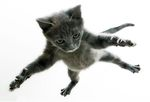 Кот упал с 5 этажа