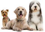 Клички собак кобелей