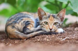 Как назвать кота или кошку