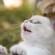 Как правильно кормить двухмесячного котенка