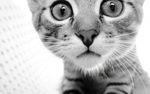 Клички для котов