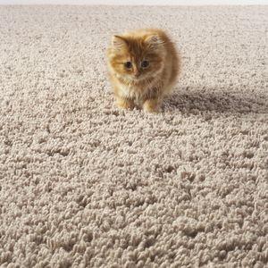 Как очистить ковер от кошачьего запаха