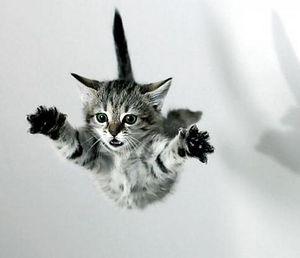 Как помочь кошке упавшей с высоты