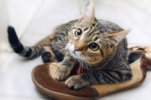 Запах кошки в обуви