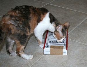 ак валерьянка влияет на кошек