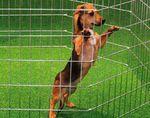 Вольеры для собак: проекты