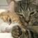 Двеннадцать самых ласковых пород кошек