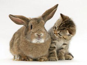 Котовасия - портал о домашних животных