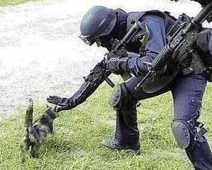 Почему кошка ведет себя агрессивно