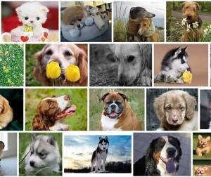 Выбираем самую красивую породу собак