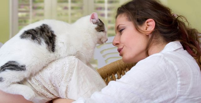 Чем опасен токсоплазмоз у кошек