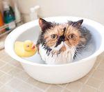 Когда можно купать котенка