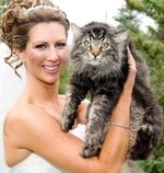 Отзыв о сибирской кошке