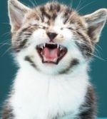 Таблетки для кошек от глистов