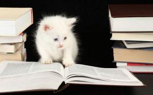 10 умных пород кошек