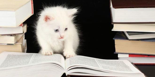 10 самых умных кошек