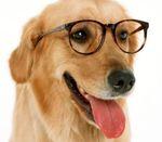 Рейтинг самых умных собак