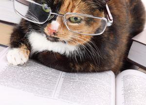 Кто умнее, кот или кошка