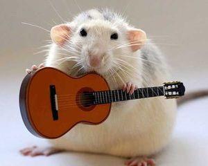 Если приснилась крыса