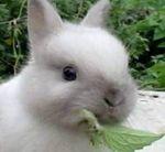 Чем можно кормить декоративных кроликов