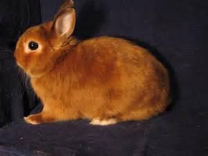 Кормление карликового цветного кролика