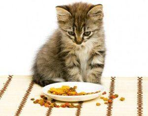 Какой корм для кошки лучше