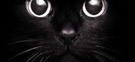Бомбейская кошка — личная мини-пантера