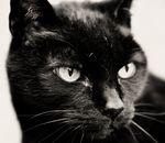 О плюсах и минусах стерилизации кошек