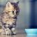 10 кошачьих кормов всех классов