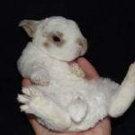 Отзыв владельца кролика рекса