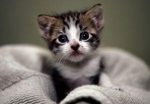 Как назвать маленького котенка мальчика