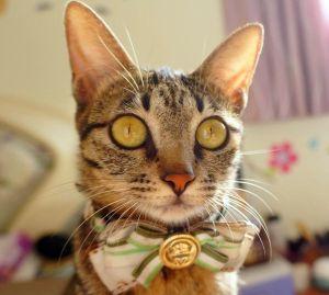 Котенок мужского пола