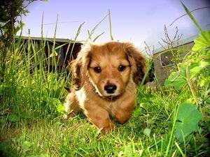 Обустройство собаки на даче