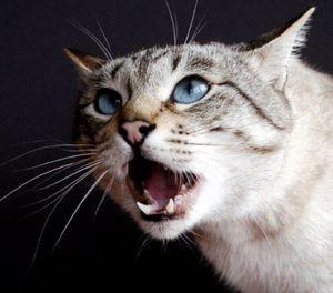 Заражение герпесовирусом кошек