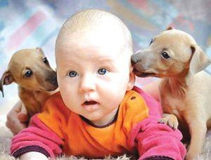 Маленькие породы собак для детей