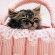 Мальчики-девочки: как узнать пол котенка