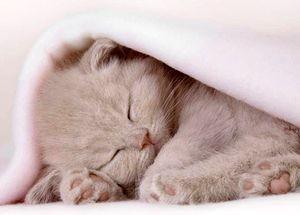 Дозировка золетила кошкам
