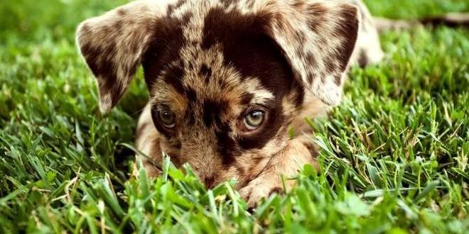 Разновидности лишая у собак