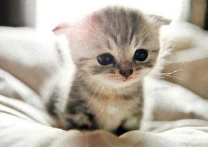 Последствия кальцивироза у кошек