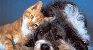 Больные животные