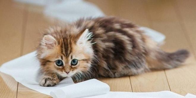 Диарея у кошки — насколько опасен недуг?