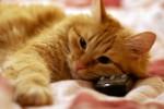 Диарея у кота