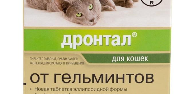 Дронтал для кошек и котят
