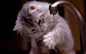 Как правильно купать кота