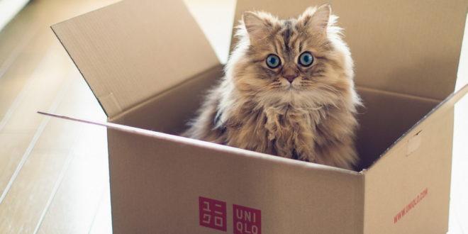 Узнайте, как спокойно переехать, если в доме живёт кот