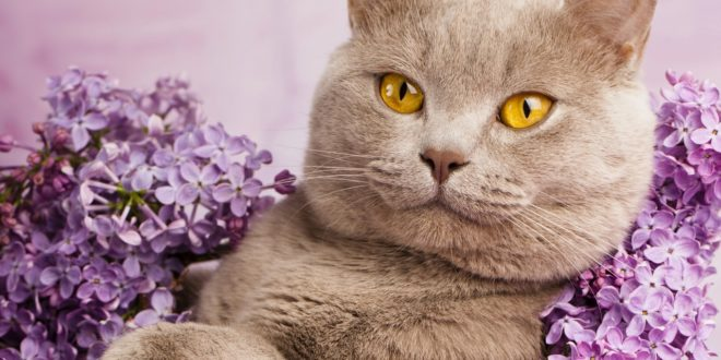 Кошки: 5 секретов языка телодвижений