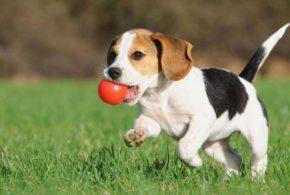 5 главных трудностей в содержании собаки