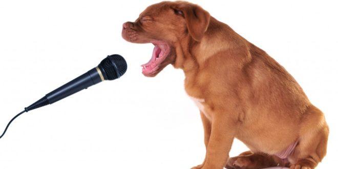 Как научить любимую собаку пению